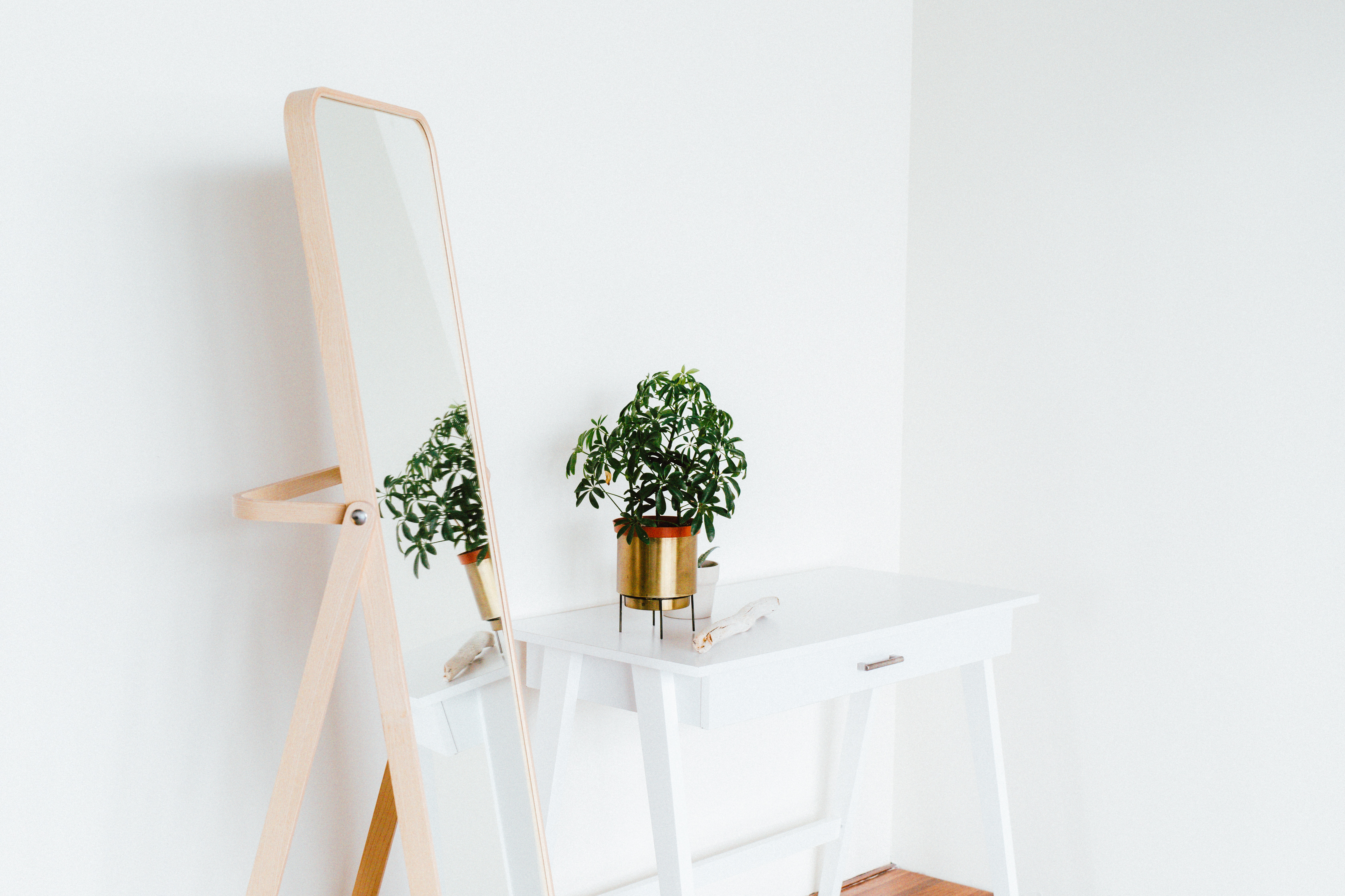 5 Low Maintenance Plants To Put In Your Home - Design In A Box